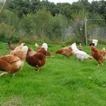Eden Farmed Animal Sanctuary Ireland. Photo Gallery