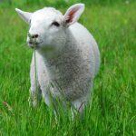 Eden Farmed Animal Sanctuary Ireland. Photo Gallery