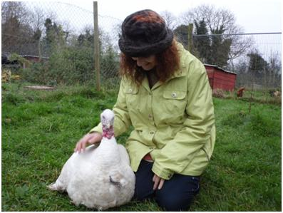 Sandra and Saoirse - rescued turkey at EDEN Farmed Animal Sanctuary in Ireland