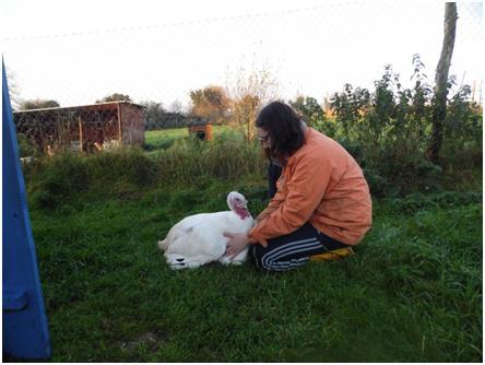 Saoirse - rescued turkey at EDEN Farmed Animal Sanctuary in Ireland