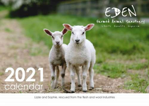Eden Farmed Animal Sanctuary Calendar 2021 front cover showing 2 lambs on path